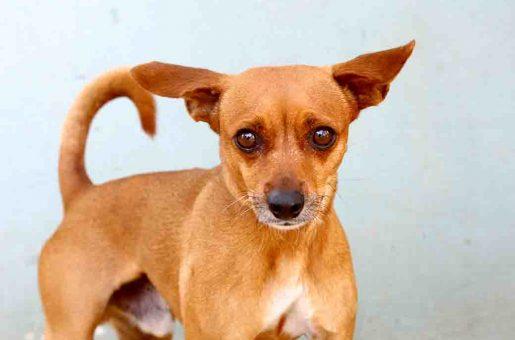 ג'נגו כלב לאימוץ אגודת צער בעלי חיים בישראל