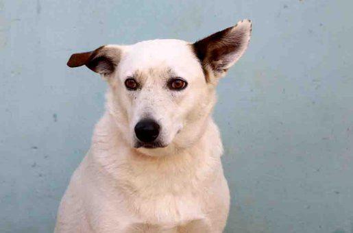מיילי כלבה לאימוץ אגודת צער בעלי חיים