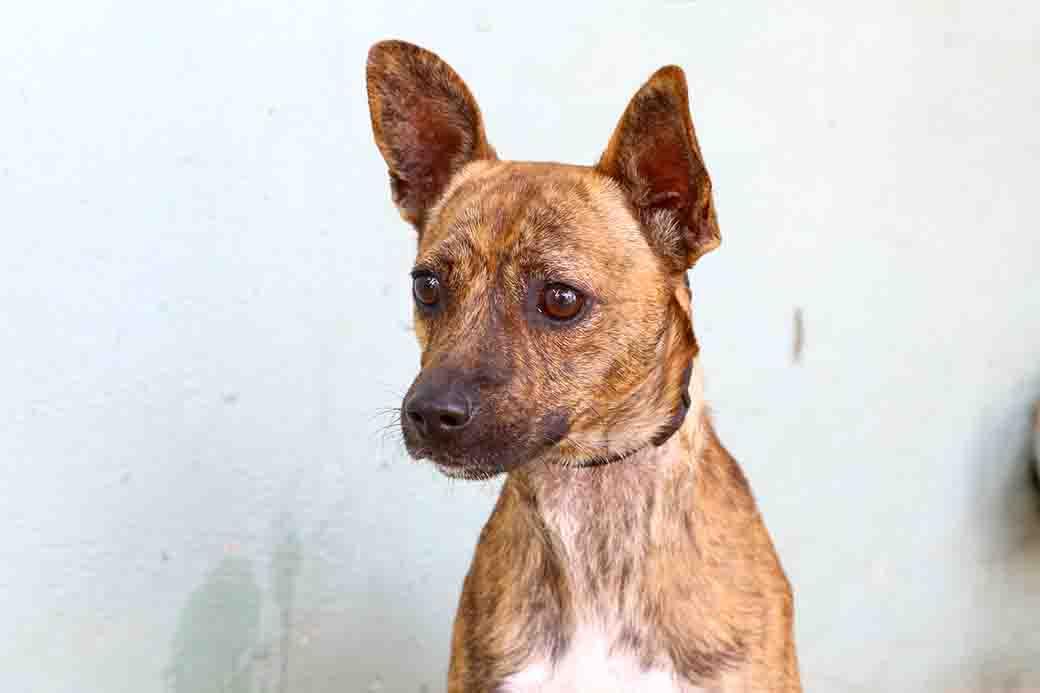 שלי כלב לאימוץ אגודת צער בעלי חיים בישראל