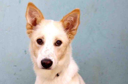 שלג כלב לאימוץ אגודת צער בעלי חיים בישראל