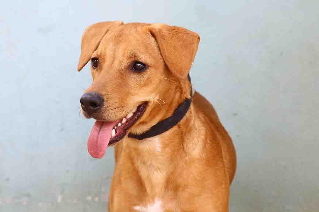 באס כלב לאימוץ אגודת צער בעלי חיים