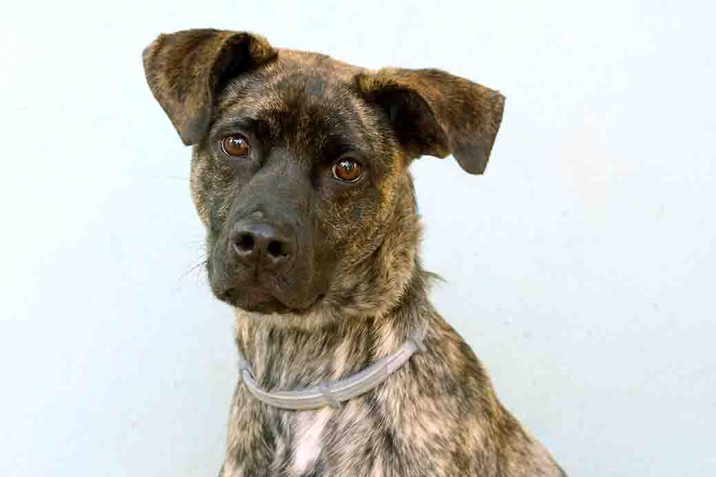 זארה כלבה לאימוץ אגודת צער בעלי חיים