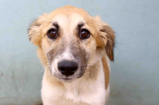 דורי כלבה לאימוץ אגודת צער בעלי חיים בישראל