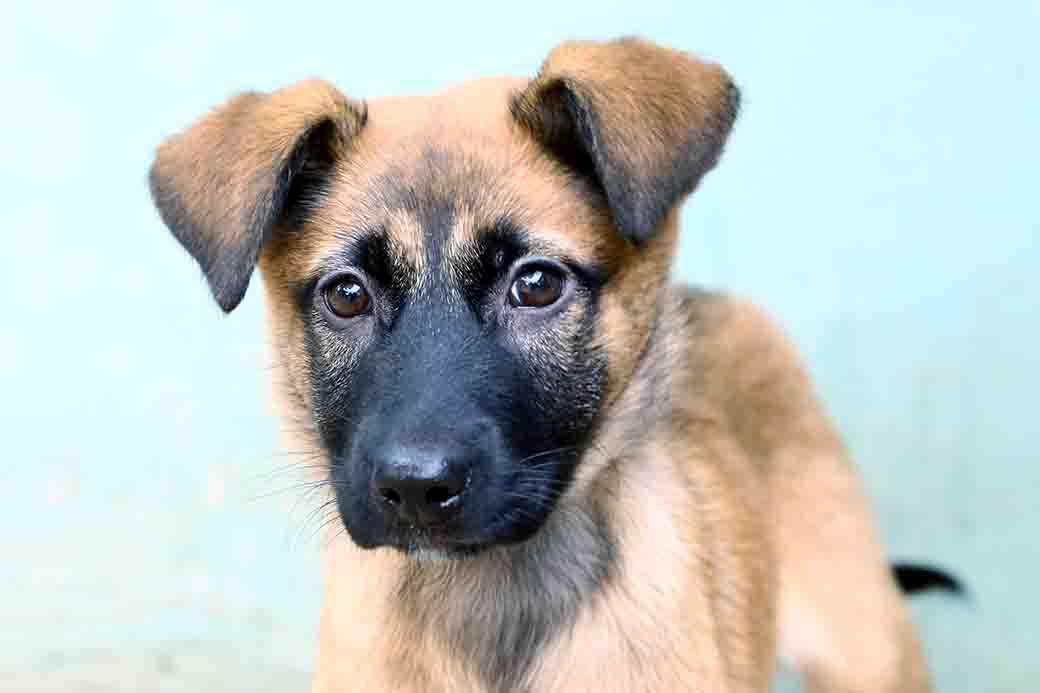 סטפני כלבה לאימוץ אגודת צער בעלי חיים בישראל