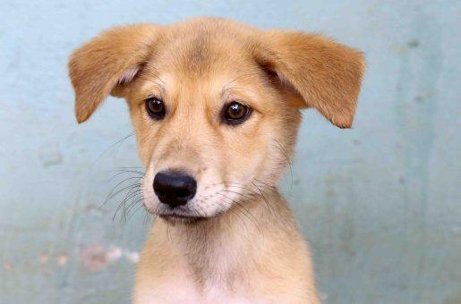 נינה כלבה לאימוץ אגודת צער בעלי חיים בישראל