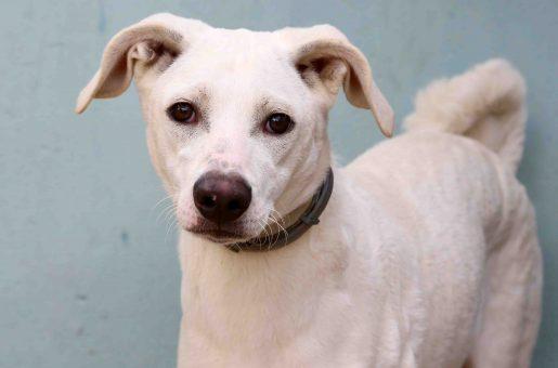 קאי כלב לאימוץ אגודת צער בעלי חיים בישראל