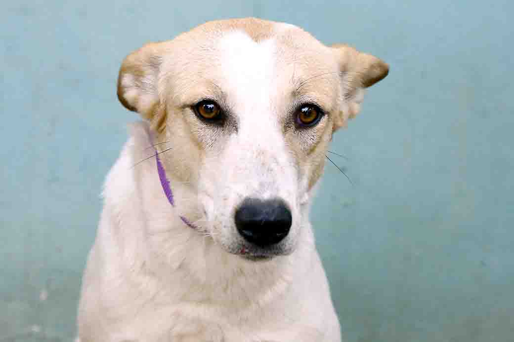 ג'ייד כלבה לאימוץ אגודת צער בעלי חיים בישראל