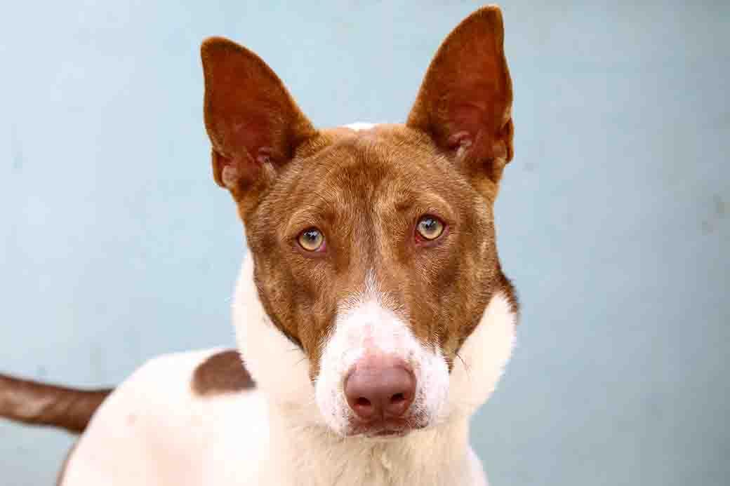 קרמבו כלב לאימוץ אגודת צער בעלי חיים