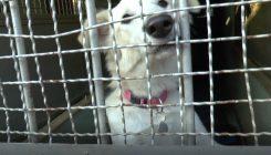 כלבים וחתולים לאימוץ - אגודת צער בעלי חיים בישראל