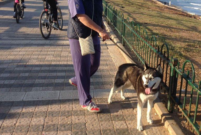 כלב אובד - אגודת צער בעלי חיים בישראל