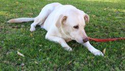 כלב לאימוץ - אגודת צער בעלי חיים בישראל