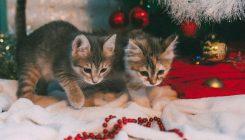 גורי חתולים לאימוץ - אגודת צער בעלי חיים בישראל