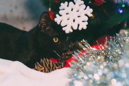 חתול לאימוץ - אגודת צער בעלי חיים בישראל