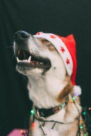כלבה לאימוץ - אגודת צער בעלי חיים בישראל