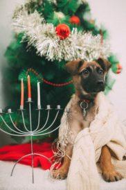 גור כלבים לאימוץ - אגודת צער בעלי חיים בישראל