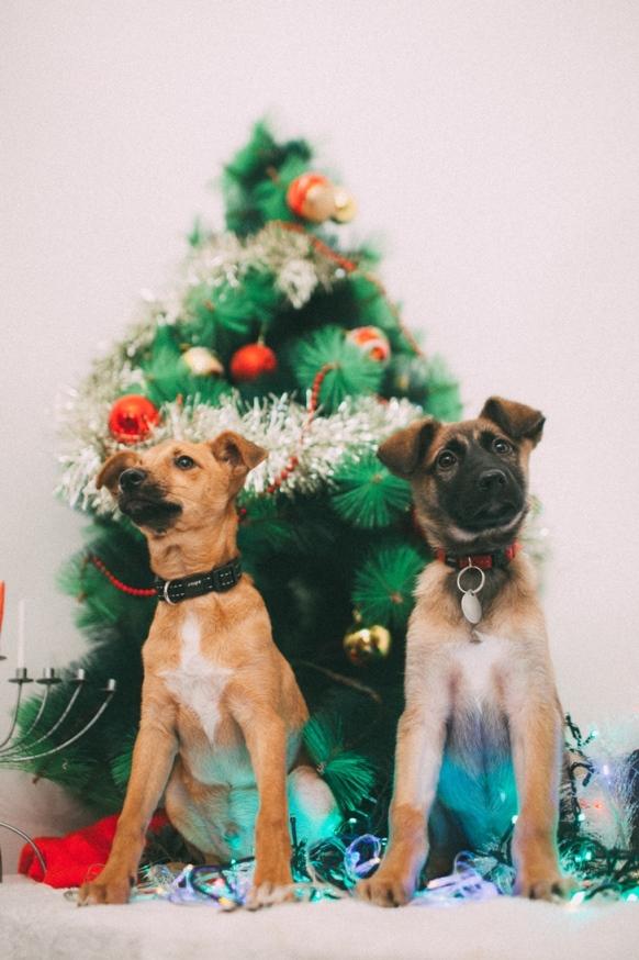 גורי כלבים לאימוץ - אגודת צער בעלי חיים בישראל