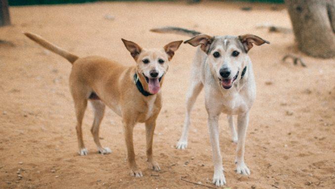 מרגו – כלבה לאימוץ – אגודת צער בעלי חיים בישראל