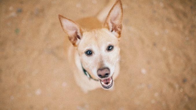מוניק – כלבה לאימוץ – אגודת צער בעלי חיים בישראל