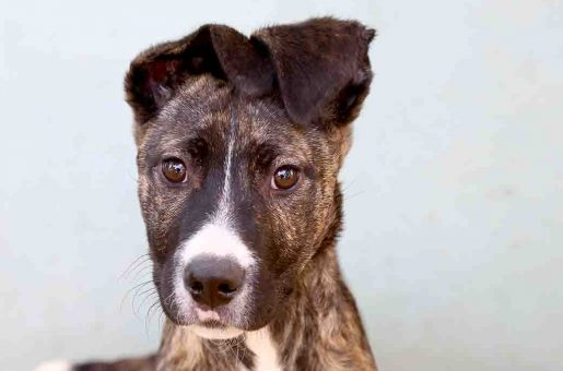 דאוני כלבה לאימוץ אגודת צער בעלי חיים בישראל