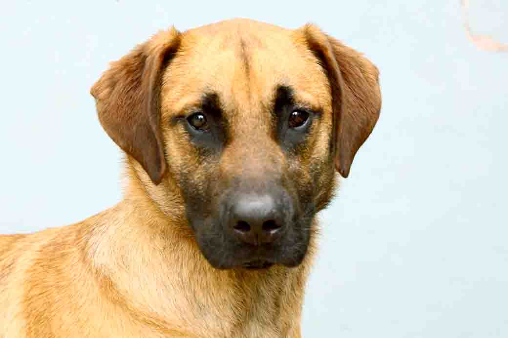 ליאו כלב לאימוץ אגודת צער בעלי חיים בישראל