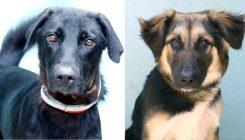 כלבים לאימוץ - אגודת צער בעלי חיים בישראל