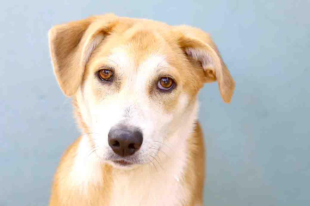 מיילו כלב לאימוץ אגודת צער בעלי חיים בישראל