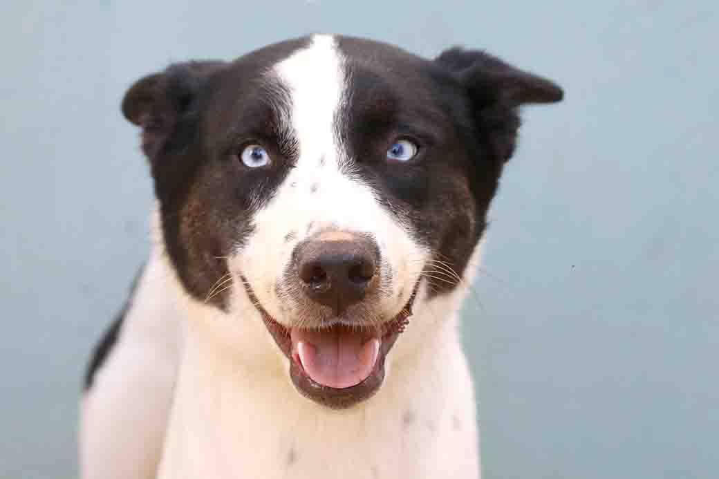 איימי כלבה לאימוץ אגודת צער בעלי חיים בישראל