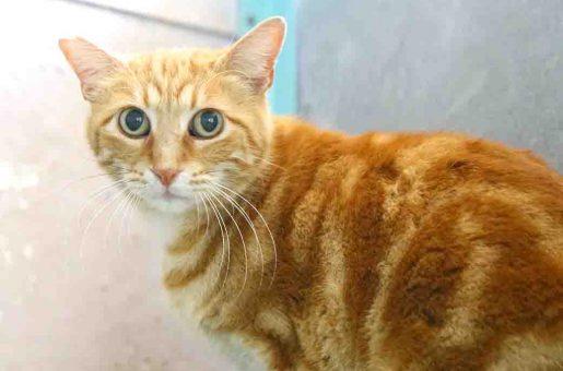 דינדי חתולה לאימוץ אגודת צער בעלי חיים בישראל