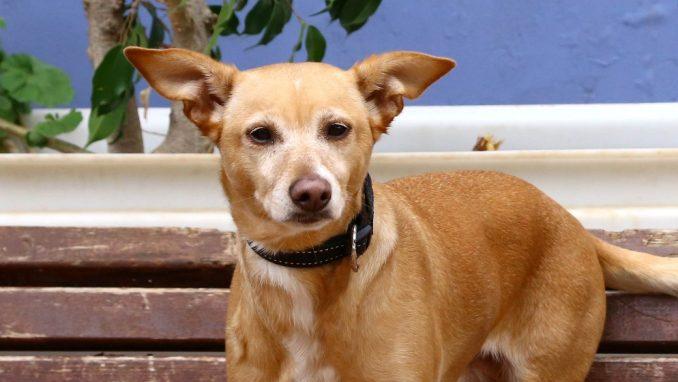 מוניק - כלבה לאימוץ - אגודת צער בעלי חיים בישראל