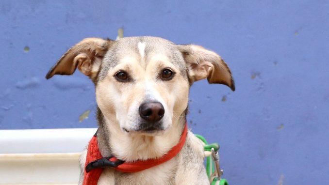 מרגו - כלבה לאימוץ - אגודת צער בעלי חיים בישראל