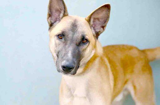 לב כלב לאימוץ אגודת צער בעלי חיים בישראל