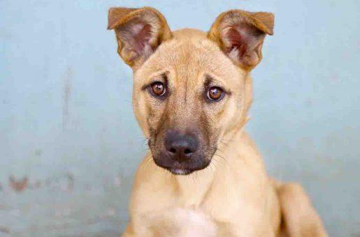 קורה כלבה לאימוץ אגודת צער בעלי חיים בישראל
