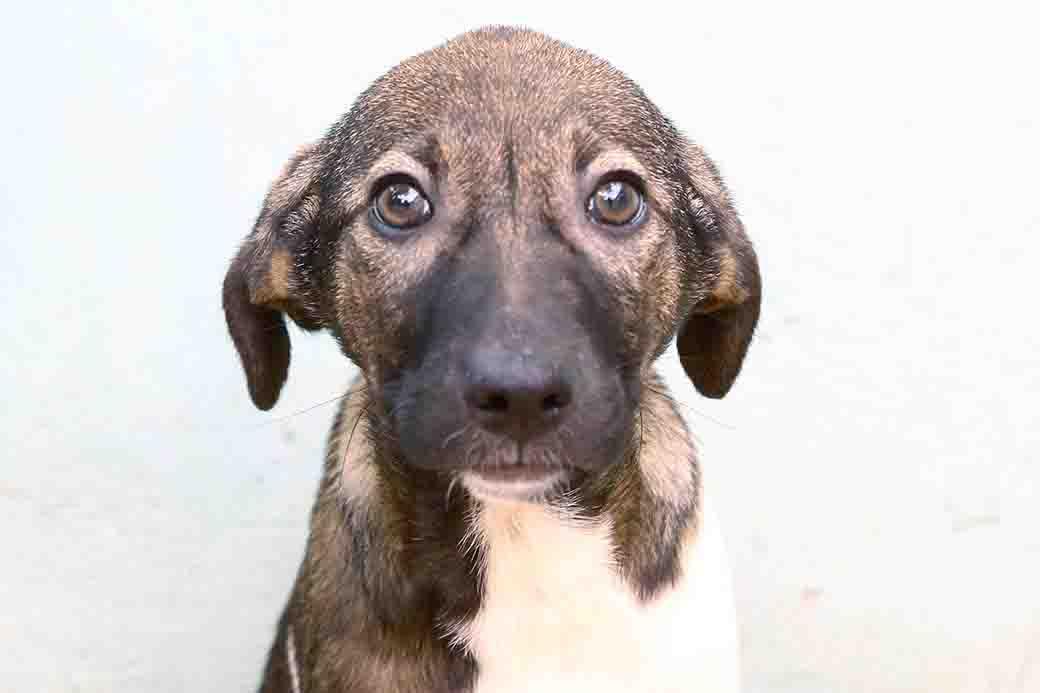 רונאלדיניו כלב לאימוץ מאגודת צער בעליי חיים