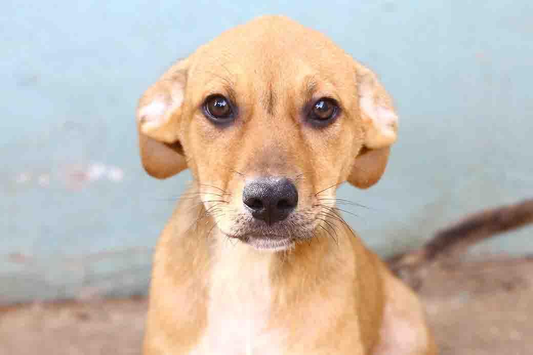 בקאהם כלב לאימוץ מאגודת צער בעליי חיים בישראל