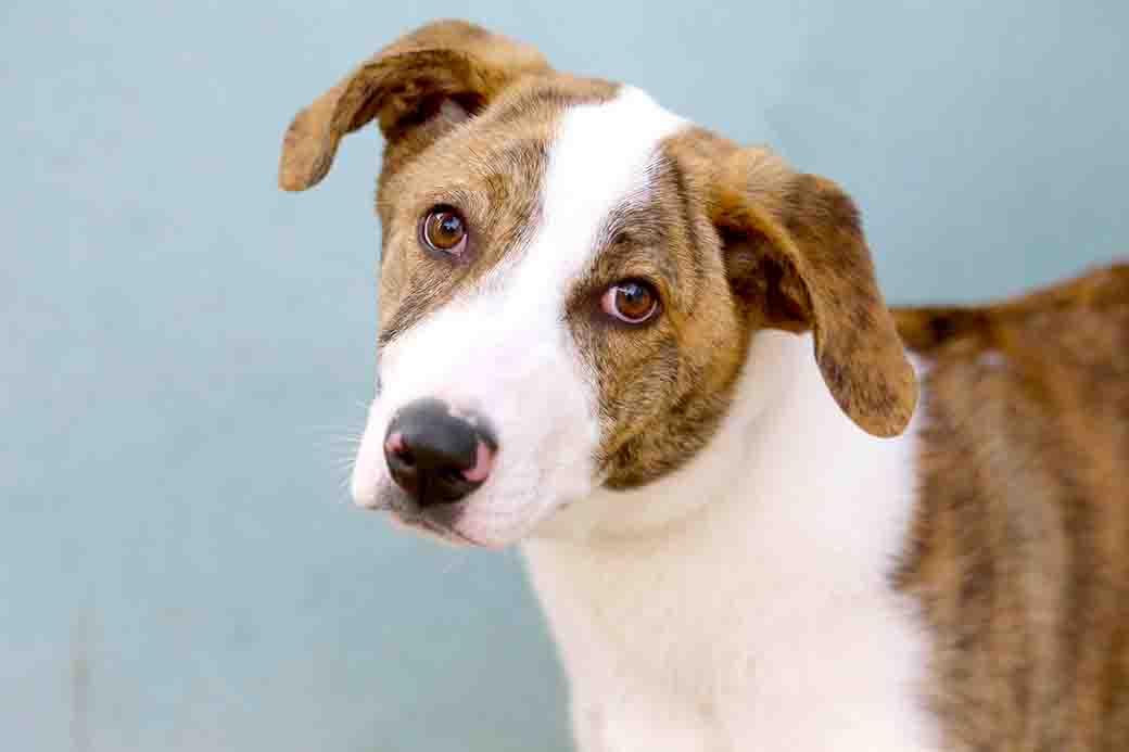 שוקו כלב לאימוץ אגודת צער בעלי חיים בישראל