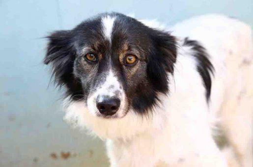 שינה כלבה לאימוץ אגודת צער בעלי חיים בישראל
