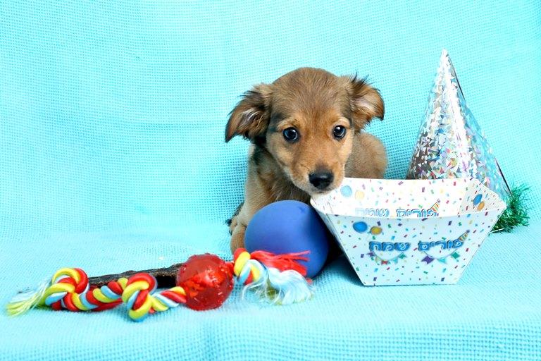 משלוחי מנות לכלבים ולחתולים - אגודת צער בעלי חיים בישראל