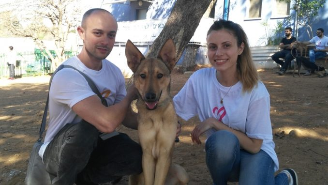 יום מעשים טובים – התנדבות עם בעלי חיים – אגודת צער בעלי חיים בישראל