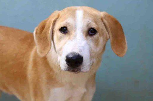 בול כלב לאימוץ אגודת צער בעלי חיים בישראל