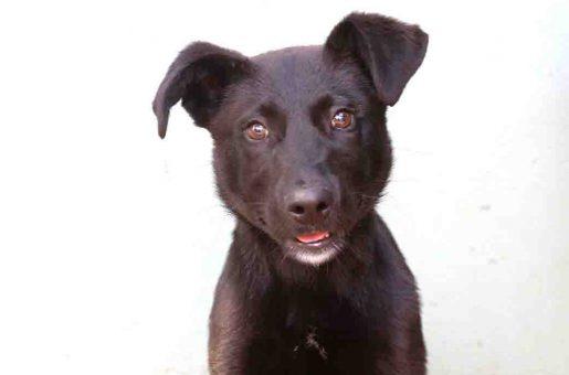 אליעזר כלב לאימוץ אגודת צער בעלי חיים בישראל