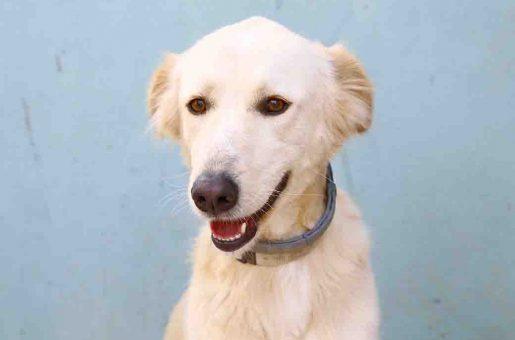 סנדי כלבה לאימוץ אגודת צער בעלי חיים בישראל