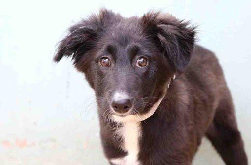 מירנדה כלבה לאימוץ אגודת צער בעלי חיים בישראל