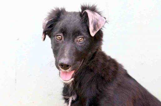 צ'ילי כלבה לאימוץ אגודת צער בעלי חיים בישראל