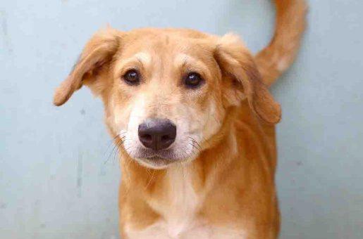 ספידי כלב לאימוץ אגודת צער בעלי חיים בישראל