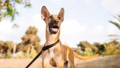 טיולים עם כלבים - אגודת צער בעלי חיים בישראל
