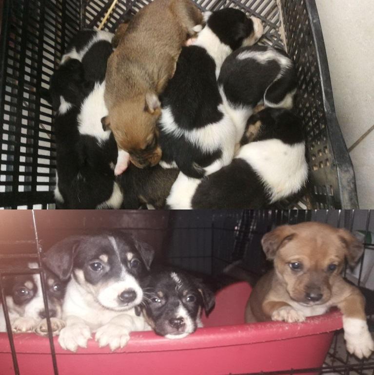 נטישת גורי כלבים - אגודת צער בעלי חיים בישראל