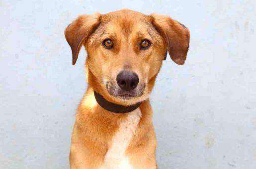 ברוס כלב לאימוץ אגודת צער בעלי חיים בישראל