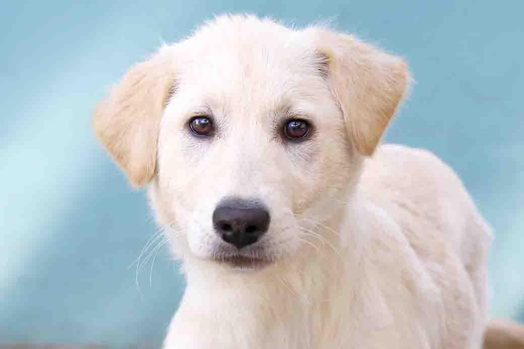ג'סי כלבה לאימוץ אגודת צער בעלי חיים בישראל