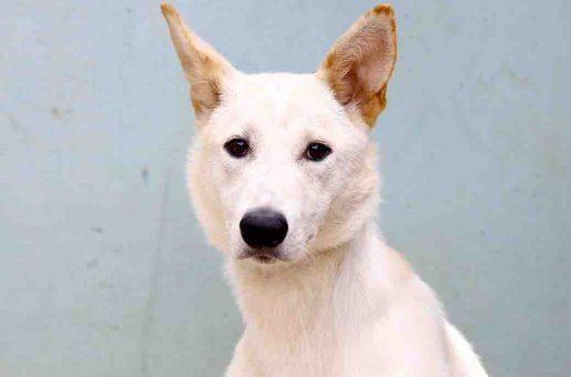 קוקו כלבה לאימוץ אגודת צער בעלי חיים בישראל