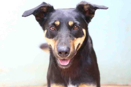 ריילי כלבה לאימוץ אגודת צער בעלי חיים בישראל